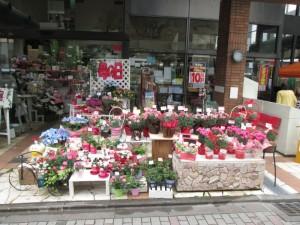 【京都本店】本日は、「出張相談会in大国屋白川店」です。カーネーションもお隣にございます。